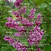 Essential Digital Art Posters - Desiderata with Lilac Buds and Texture Poster by Barbara Griffin