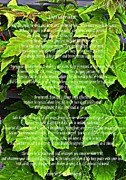 Essential Digital Art Posters - Desiderata with Young Maples Poster by Barbara Griffin
