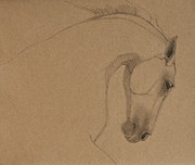 Wild Horses Drawings Originals - Determination by Jani Freimann