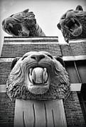 Detroit Tigers Comerica Park Tiger Statues Print by Gordon Dean II