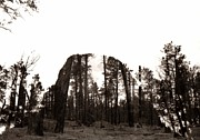 Horn Bear Framed Prints - Devils Tower Revealed Framed Print by Anthony Wilkening