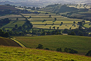 Devonian Tapestry Of Fields Print by Pete Hemington