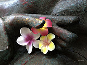 Hawaiian Plumeria Art - Devotional by Cheryl Young