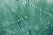 Dew Prints - Dew drops Print by Heike Hultsch