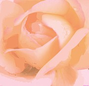 Guest Painting Prints - Dew Laced Pink Rose  Print by Rosemarie E Seppala