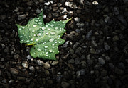 Droplets Posters - Dew on Leaf Poster by Scott Norris