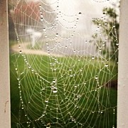 Recently Sold - Featured Art - Dewey Spiderweb by Michael Gonzalez