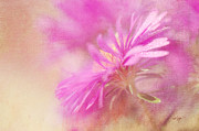 Aster Prints - Dewy Pink Asters Print by Lois Bryan