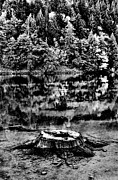 Fir Trees Posters - Diablo Lake Stump Black And White Poster by Benjamin Yeager