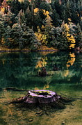 Reflecting Water Prints - Diablo Lake Tree Stump Print by Benjamin Yeager