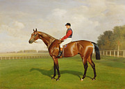 Horse Racing Framed Prints - Diamond Jubilee Winner of the 1900 Derby Framed Print by Emil Adam