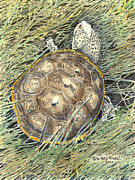 Reptiles Drawings Prints - Diamondback Terrapin Print by Mike Howell