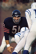 Dick Framed Prints - Dick Butkus Poster Framed Print by Sanely Great