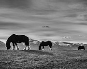 Dick's Horses Print by Dianne Arrigoni