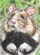 Paws Drawings Framed Prints - Did Someone Say Nuts Framed Print by J McCombie