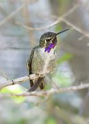 Saija  Lehtonen - Did You Say Hummingbird?
