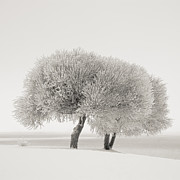 Different Season Print by Ari Salmela