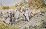 Scandinavian Paintings - Digging Potatoes by Carl Larsson