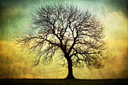 Digital Art Tree Silhouette Print by Natalie Kinnear