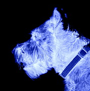 Mini Schnauzer Digital Art - Digital Schnauzer by Mickey Harkins