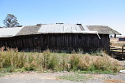 Old Country Roads Prints - Dilapidated Ranch in Petaluma California 5D24411 Print by Wingsdomain Art and Photography