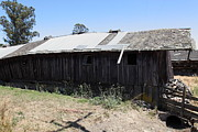 Old Country Roads Prints - Dilapidated Ranch in Petaluma California 5D24413 Print by Wingsdomain Art and Photography
