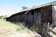 Old Country Roads Prints - Dilapidated Ranch in Petaluma California 5D24416 Print by Wingsdomain Art and Photography