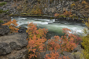 Deschutes River Posters - Dillon Falls in Autumn Poster by Christian Heeb
