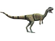 Dilophosaurus Standing, White Print by Craig Brown