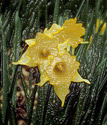 Daffodils Originals - Dimensional Daffodils by Wide Awake  Arts