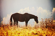 Grazing Horse Posters - Dining at Dusk Poster by Ryan Wyckoff