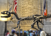 Gregory Dyer - Dinosaur at the Natural History Museum