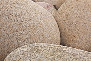 Julian Elliott - Dinosaur eggs of Porth...