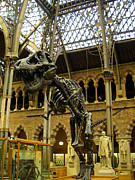 Aldous Huxley Photos - Dinosaur skeleton in the Museum of Natural History Oxford England by Robert Ford