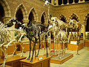 Aldous Huxley Photos - Dinosaur Skeletons in the Oxford University Museum of Natural History Oxford England by Robert Ford