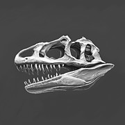 Jurassic Park Digital Art - Dinosaur skull by Ales Pulpan
