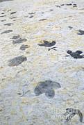 James Steinberg - Dinosaur Tracks