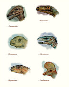 Dinosaurs Posters - Dinosaurs Ilustration Poster Poster by World Art Prints And Designs