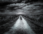 David Mcchesney - Dirt Road