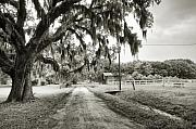 Coosaw Framed Prints - Dirt Road on Coosaw Plantation Framed Print by Scott Hansen