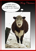 Photography By Govan; Vertical Format Framed Prints - Disappointed Christmas Cow photo greeting card Framed Print by Andrew Govan Dantzler