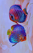 Discus Photo Prints - Discus World Print by Roberto Cortes