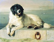 Newfoundland Prints - Distinguished Member of the Humane Society Print by Pg Reproductions