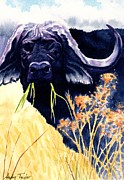 Cape Buffalo Paintings - Disturbed by Andy Taylor