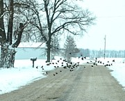 Winter Roads Art - Disturbing the Flock by Julie Dant