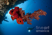 Water In Cave Prints - Diver Looks On At A Bright Red Soft Print by Steve Jones