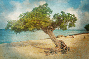 A New Focus Photography - Divi Tree textured