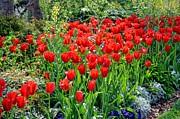 Tanya Tanski - Divine Garden......