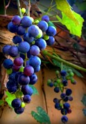 Blue Grapes Posters - Divine Perfection Poster by Karen Wiles