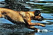 Don Mann - Diving Dog